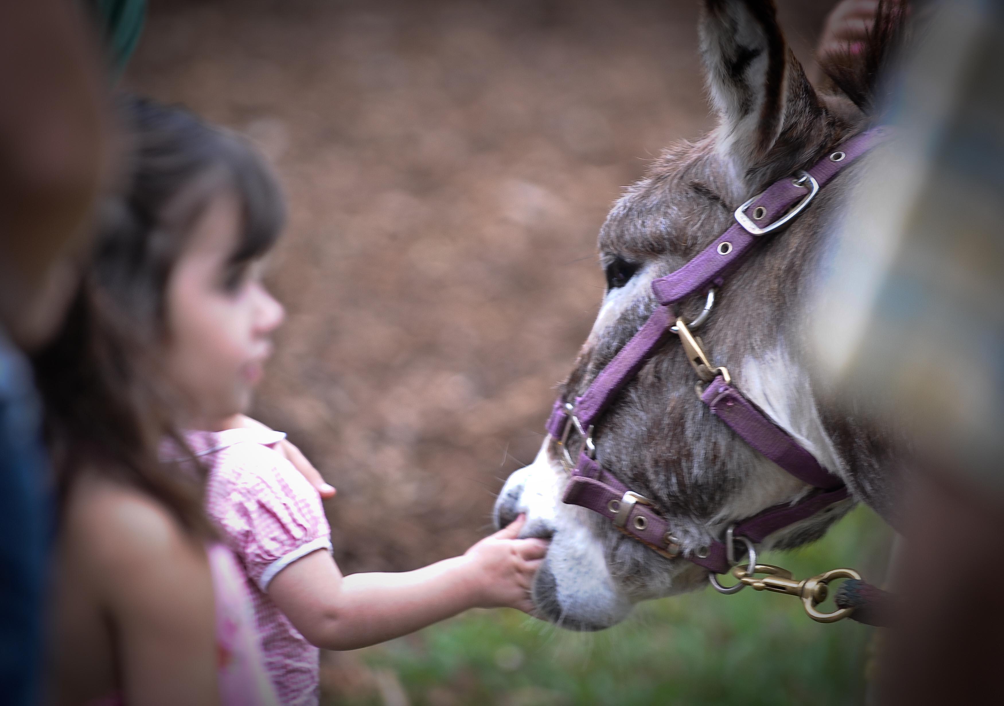 donkey biting