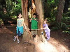 Road Trip Diary: Discovering the Wonders of California's Redwood National Forest Thumbnail